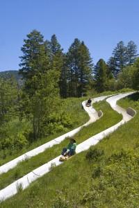 Snow King Mountain's Alpine Slide