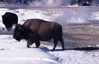 Jackson Hole Wildlife